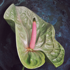 anthurium_feat