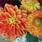 chrysanthemum @ {nifty thrifty things}