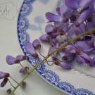 wisteria from {nifty thrifty things}