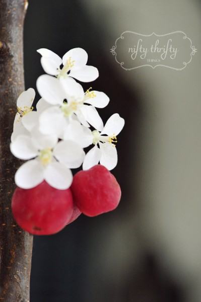 apple blooms from {nifty thrifty things}