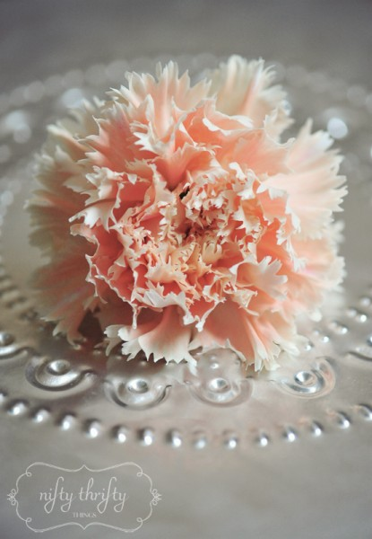 carnations from {nifty thrifty things}
