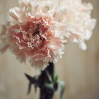 carnation from {nifty thrifty things}