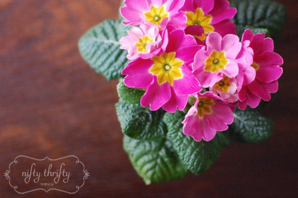 primrose from {nifty thrifty things}