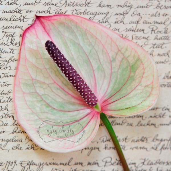 calla from {nifty thrifty things}